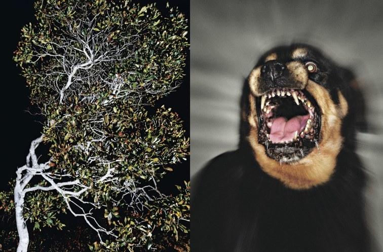 ZZ Packer - Dayward (ảnh - (trái) Katherine Wolkoff : Art + Commerce; (phải) Glen Wexler - newyorker.com) .jpg